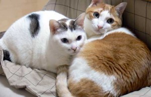about-keeping-many-cats-03